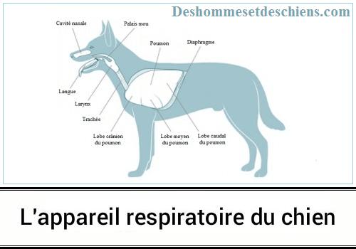 Appareil respiratoire chien elevage du bois foucher
