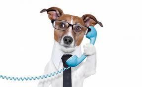 Psychologie canine elevage du bois foucher bichons maltais